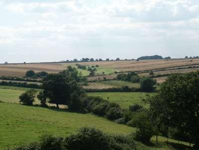 open field farming